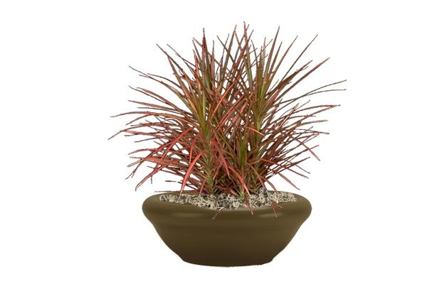 Zz Plant Benefits